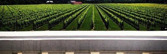 raphael-vineyards